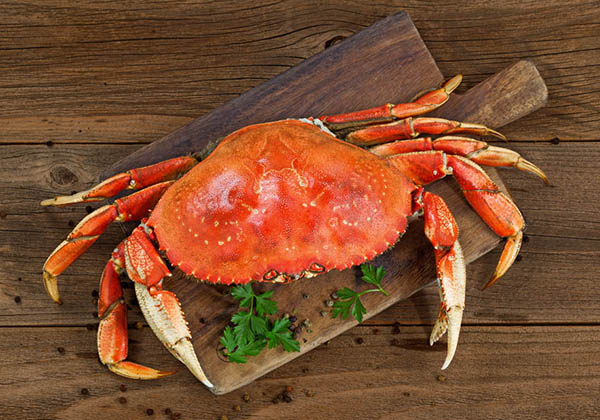 wholesale dungesness crab keyport llc