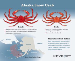 Alaska Snow crab Infographic
