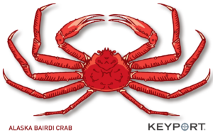 Alaska Bairdi Snow crab drawing