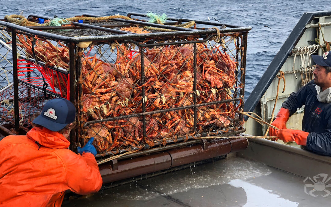 The Golden King Crab Story